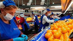 Foto de Cooperativas Agro-alimentarias de Andalucía urge medidas económicas para el sector primario