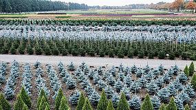 Foto de La ausencia de un rescate financiero provocará la quiebra del sector de flor cortada y planta viva