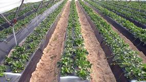 Foto de Cooperativas Agro-Alimentarias teme la falta de mano de obra en las cosechas hortofrutícolas