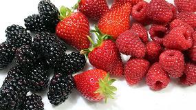Foto de Freshuelva y FEPEX solicitan medidas excepcionales para paliar la crisis en el sector de frutos rojos