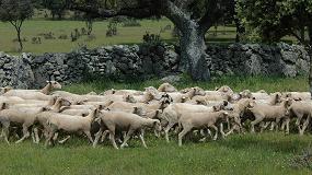 Foto de Demandan acciones urgentes en la ganadería extensiva por la caída de precios