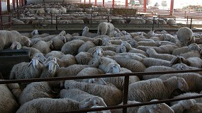 Foto de La producción de carne de ovino sigue a la baja en 2020 y cae un 1,1% en enero