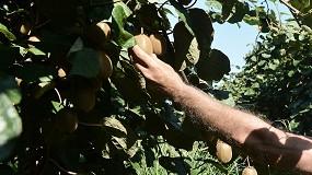 Foto de El Valle del Ebro necesita 50.000 personas para la recolección de la fruta