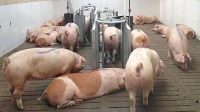 Foto de China aumenta las autorizaciones a empresas españolas para la exportación de carne de porcino