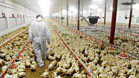 Foto de La caída del turismo provoca pérdidas cuantiosas en el sector avícola