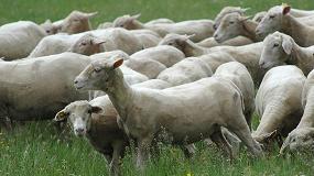 Foto de Las cooperativas piden un amplio presupuesto para las ayudas de ovino y caprino