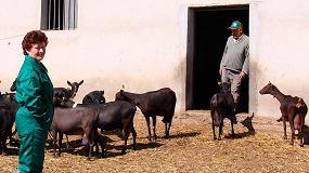 Foto de Demandan ayudas a los ganaderos de caprino y ovino de leche por reducir un 10% su producción