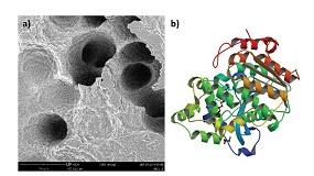Foto de Biodegradación y síntesis de plásticos mediante el uso de enzimas y microorganismos seleccionados