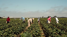 Foto de AEFA provee de mascarillas a los trabajadores del campo mediante una donación de 90.000 euros