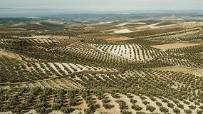 Foto de El olivar y su adaptación al cambio climático