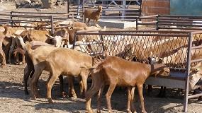 Foto de Asaja Málaga denuncia que los ganaderos de caprino recibirán la mitad de ayudas que los de ovino