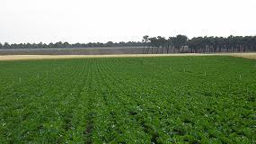 Foto de El cultivo de remolacha azucarera retrocede en la zona norte y se queda en 21.000 hectáreas