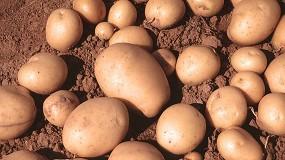Foto de El sector de la patata asume el reto de una campaña llena de incógnitas