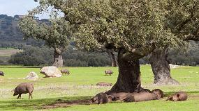 Foto de Ayudas para el porcino ibérico de Extremadura a través del Programa de Desarrollo Rural