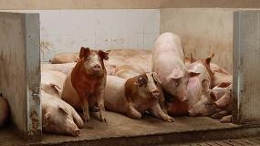 Foto de El porcino reaccionó en marzo a la crisis con un aumento del 12,7% en su producción