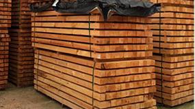 Foto de UPV diseña paneles CLT fabricados con madera de pino mediterráneo para edificios