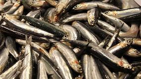 Foto de El cambio global afecta a la grasa y la salud del pescado azul de la Costa Brava