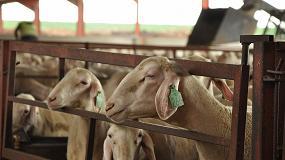 Foto de La contratación en ovino de leche sube hasta niveles históricos con más de 500 millones de litros