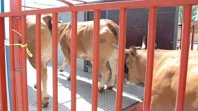 Foto de Controles en las temperaturas de los transportes de ganado durante el verano