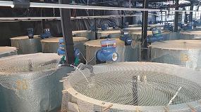 Foto de Salmones de acuicultura más sanos gracias a un nuevo aditivo para piensos