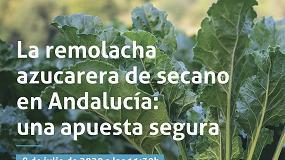 Foto de Agroteo y AgroBank abordan las claves del cultivo de remolacha de secano en Andalucía