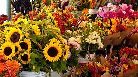 Foto de El MAPA abre una consulta pública sobre las ayudas a productores de flor cortada y planta ornamental