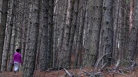 """Foto de MIMCyL: """"El sector forestal debe estar en el Pacto por la reconstrucción de Castilla y León"""""""