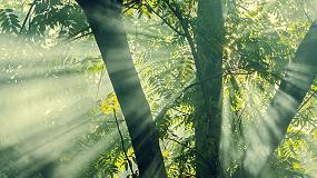 Foto de Madera tropical sostenible Fair&Precious: una elección de confort y respeto al medio ambiente para terrazas