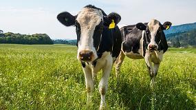 Foto de La selección genética puede mitigar los gases de efecto invernadero en vacuno lechero