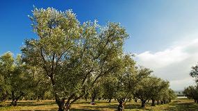 Foto de La Sierra de Segura acogerá el 7 de agosto una gran manifestación del sector olivarero