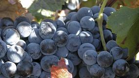 Foto de OIVE solicita nuevas medidas para el sector vitivinícola español ante la incertidumbre económica