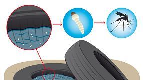 Foto de ¿Por qué el reciclado de neumáticos contribuye a evitar la proliferación de mosquitos?