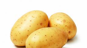 Foto de El buen inicio de la campaña de patata en Castilla y León empieza a dar síntomas de agotamiento