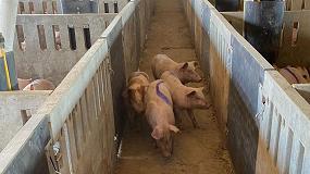 Foto de Soluciones Deplan a los nuevos requisitos en higiene, sanidad y bienestar en porcino