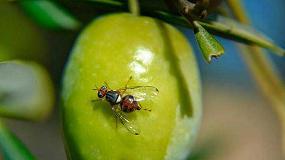 Foto de Resistencia genética a insecticidas en la mosca del olivo