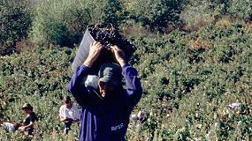 Foto de Ribera del Duero establece de forma excepcional un protocolo de prevención de COVID-19 en vendimia