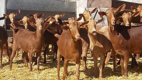 Foto de Extremadura, Andalucía y Canarias tienen los precios más bajos en caprino lechero