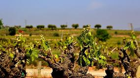 Foto de Una aplicación permitirá a las bodegas gestionar mejor las viñas para hacer frente al cambio climático