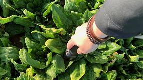 Foto de Tecnología NIRS para analizar la calidad de las hortalizas tanto en campo como en la industria