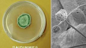 Foto de Liberar las superficies de hongos nocivos con biocidas naturales en pinturas y barnices