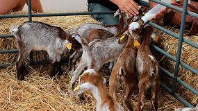 Foto de La asociación de Florida analiza la actualidad del sector caprino en Zafra
