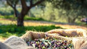 Foto de La olivicultura como motor económico y social