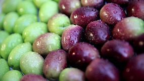 Foto de Juan Vilar presentará en Bruselas un informe sobre la importancia de la olivicultura para Europa