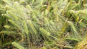 Foto de Syngenta presenta tres nuevas soluciones para el control de malas hierbas en cereal