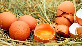 Foto de El ITC va a utilizar la cáscara del huevo para la fabricación de azulejos