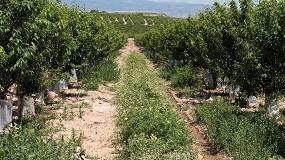 Foto de Estudian el efecto de las cubiertas vegetales sobre la biodiversidad y la rentabilidad en cultivos hortícolas