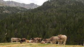 Foto de Provacuno avanza en las buenas prácticas ambientales del sector