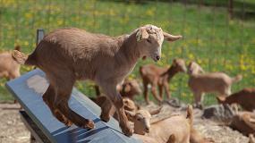 Foto de Andalucía, Canarias y Castilla y León sostienen la caída en la producción de carne de caprino