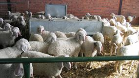 Foto de La producción de ovino de carne se hunde un 17,1% en el pasado mes de agosto