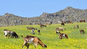 Foto de Las razas autóctonas de caprino participan en una jornada de la Red Rural Nacional